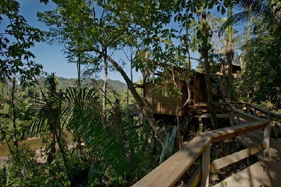 Ian Anderson's Caves Branch Jungle Lodge: Outside view of the Tree House rooms