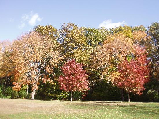 Slater Memorial Park: Slater park in the fall