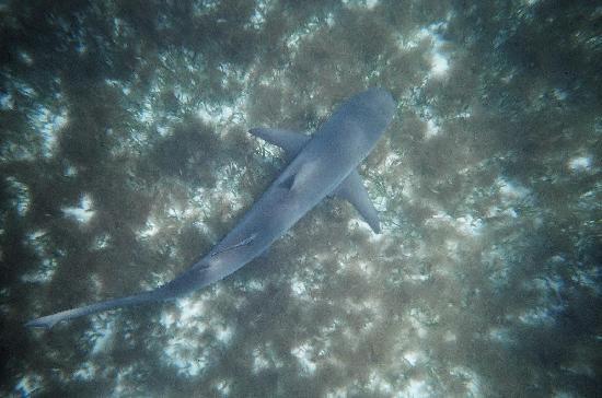 John Pennekamp Coral Reef State Park: Nurse shark directly below me