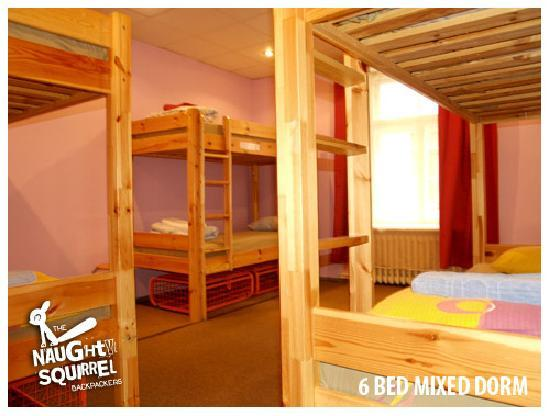 Naughty Squirrel Backpackers: 6 Bed Dorm Rooms