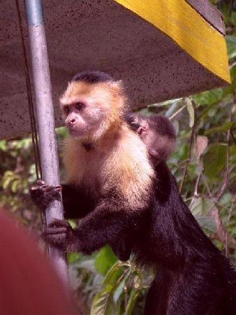 Patty's Casitas: Monkey Island