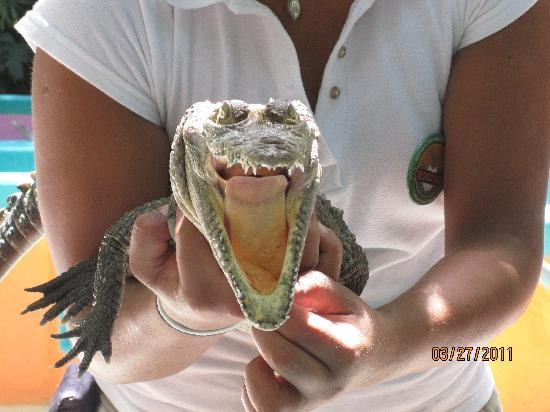 Puerto Morelos, Mexico: Open wide!  We all got to hold this one!