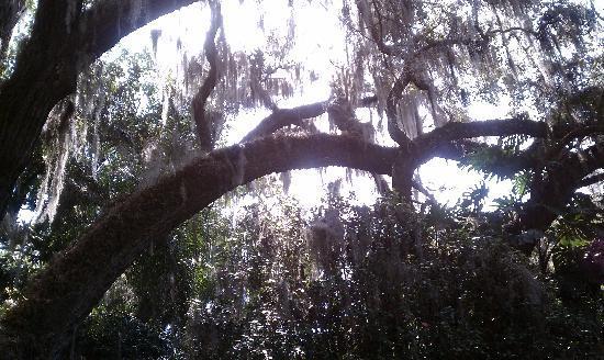 Harry P. Leu Gardens: Plenty of shade to cool off.