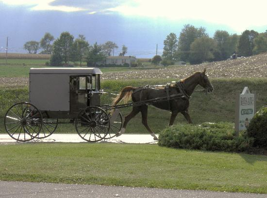 Amish Horse & Buggie passing Rayba Acres Farm.