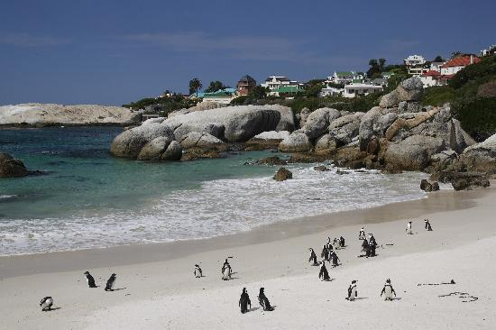 Boulders Beach Lodge And Restaurant Simon S Town Reviews Phone Number Photos Tripadvisor