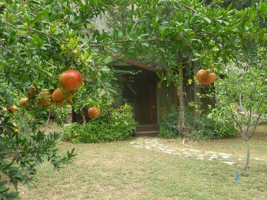 Kibala Hotel: Bungalow from the garden
