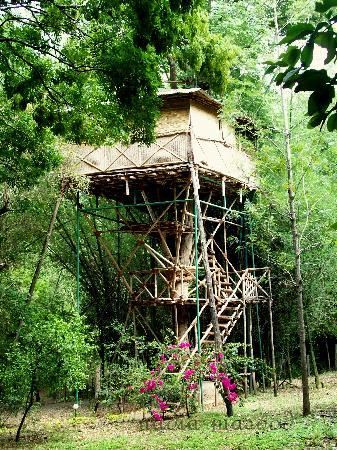Safari Land Farm & Guest House : Tree house