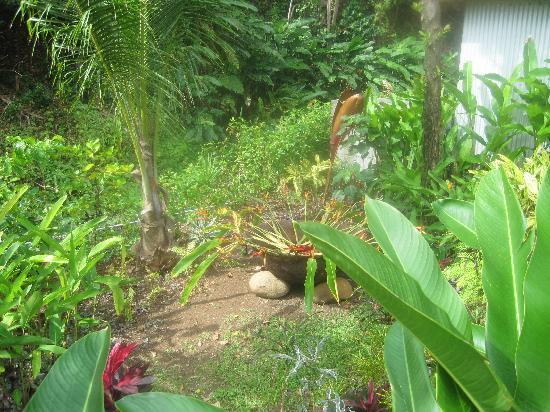 Pagua Bay Bar and Grill : Landscaping around cabana 2