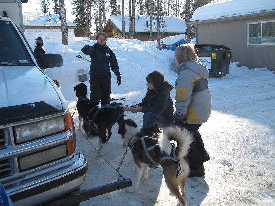 High Country Kennels: Getting to know the puppies.