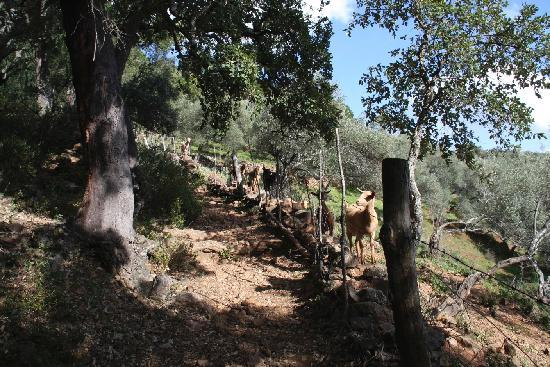 La Posada de Alajar : Nearby walking route