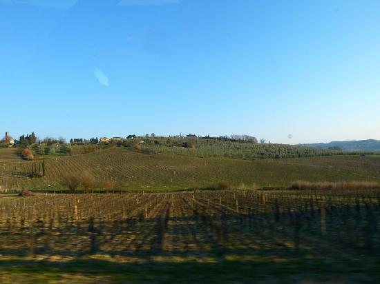Under The Tuscan Sun Tours: Vineyards