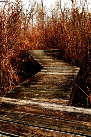 Lothian, MD: Boardwalk
