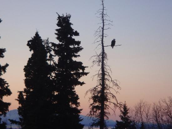 Alaska Sundance Retreat Bed and Breakfast, LLC: Bald eagles