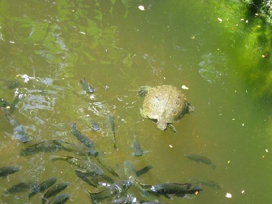 Garden of the Groves - Turtle & Koi from the bridge