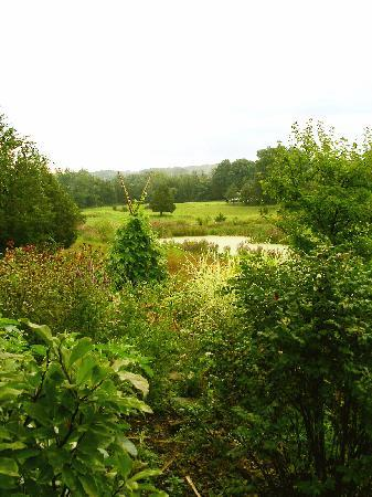 Thyme in the Country: pond overlook
