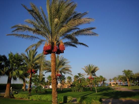 Mövenpick Resort Hurghada: tuin