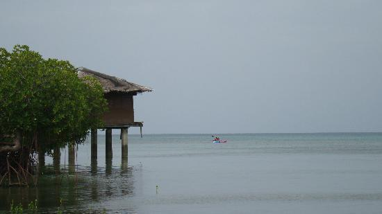 Dos Palmas Island Resort & Spa : Kayaking near the mangroves