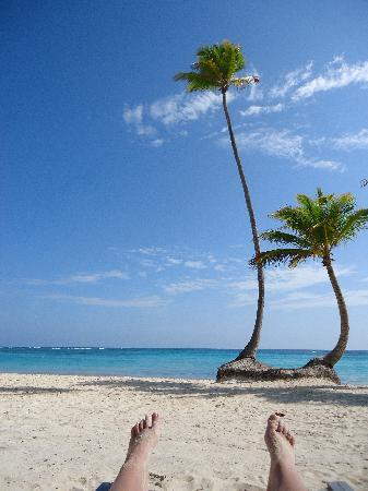Iberostar Grand Hotel Bavaro: View from the front row on the Beach!  These palm trees were great for photo ops
