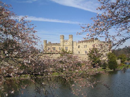 Leeds Castle: Cherry blossoms along the bridge from Castle island