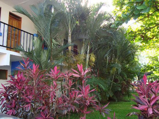 Cabinas Iguana : Garden