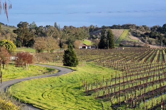 Healdsburg Country Gardens : HCG vineyard view