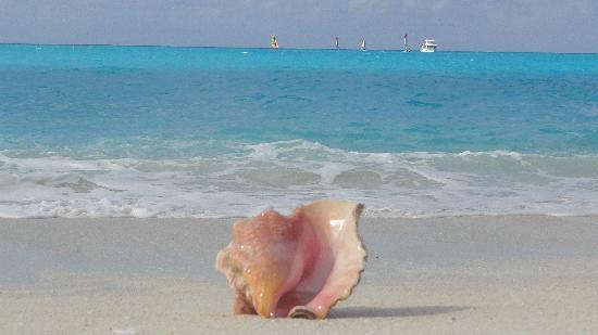 Club Med Columbus Isle: mer et coquillage
