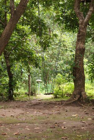 Asteya Kanha: Saawan jhula