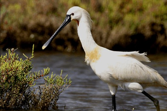 Another Level Day Tours: Algarve Bird tours