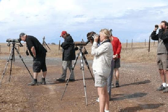 Another Level Day Tours: Bird Touts In Algarve