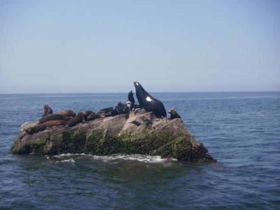 Bula: Sea Lions