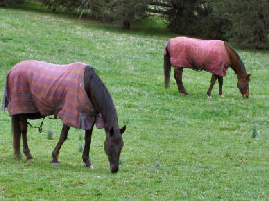 Black Horse Inn: The boys, grazing outside my back door