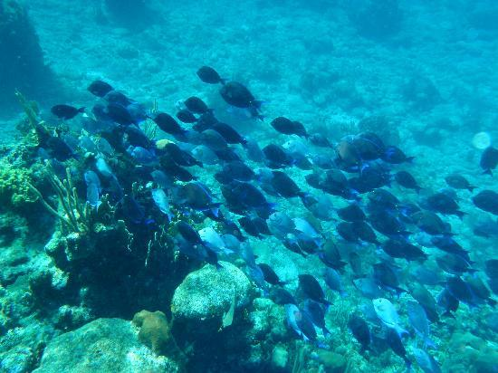 West Bay, Honduras: Snorkeling