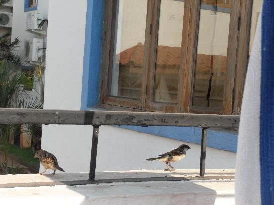 Karma Royal Haathi Mahal: Birds on our balcony