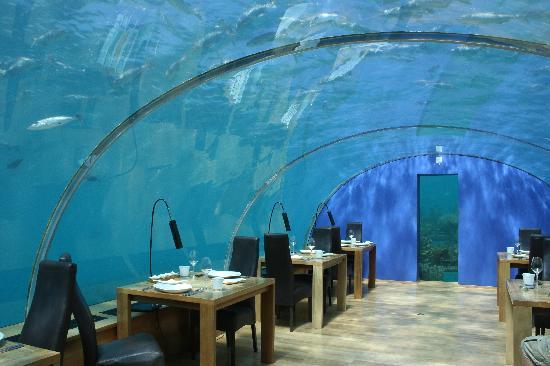 Ithaa foto van ithaa undersea restaurant rangali for Ithaa prices