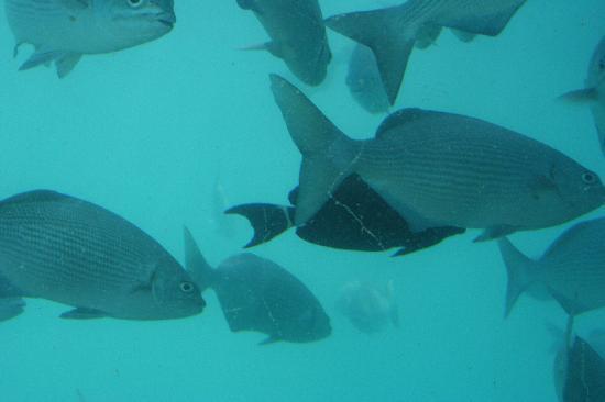 Ithaa Undersea Restaurant: Ithaa
