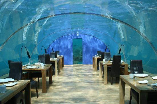 Ithaa picture of ithaa undersea restaurant rangali for Ithaa restaurant maldives