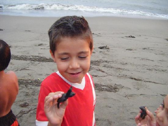 Puerto Vallarta Tours and Concierge : Releasing baby turtles