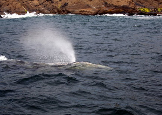 Depoe Bay, OR: another whale spray (Tradewinds Charters)