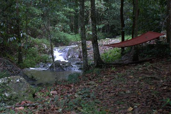 Narrows Escape Rainforest Retreat: Hammock by the water