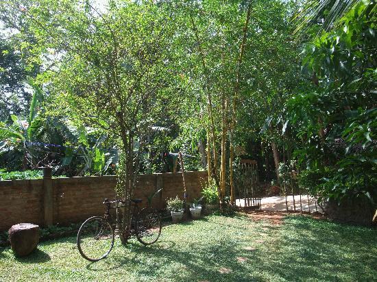 Rose Blossom Guesthouse: Garden