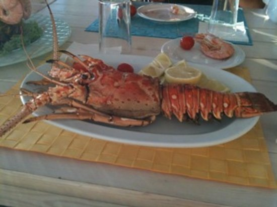 Ostria Cafe Restaurant: Lobster at OSTRIA is the best