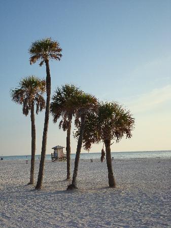 East Shore Resort : Beautiful beach