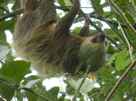 Tours Your Way: 2 toed sloth