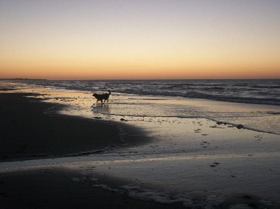 Ocean Inn: Our dog on the beach at dawn
