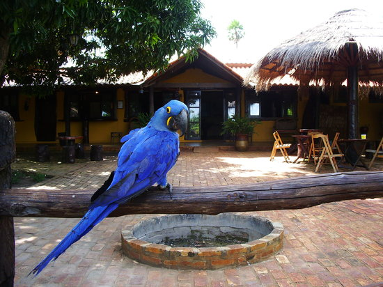 Araras Pantanal Ecolodge