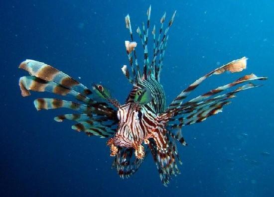Sakatia Passions: Plongée et chasse sous marine