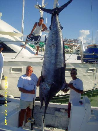 Hooked on Marlin Sportfishing: This Big Black Marlin was caught on Bella del Mar 1