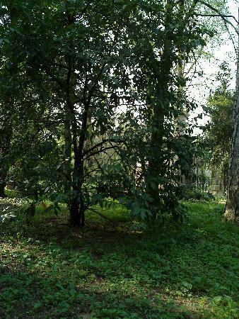 Orto Botanico di Padova: orto botanico 4