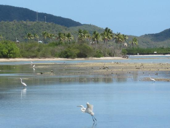 ReefView Apartments: Egrets wading on the Flats