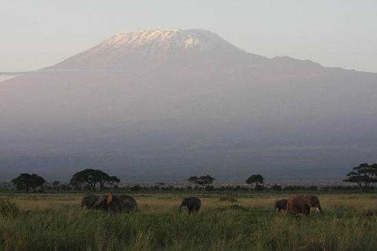 Amboseli Serena Safari Lodge: Elephants of Aboseli
